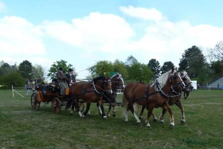 Pferd International 06