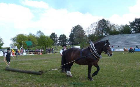 Pferd International 07