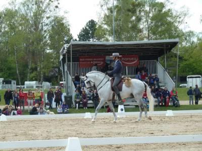 Pferd International 14