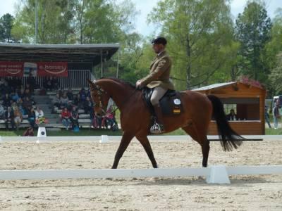 Pferd International 15