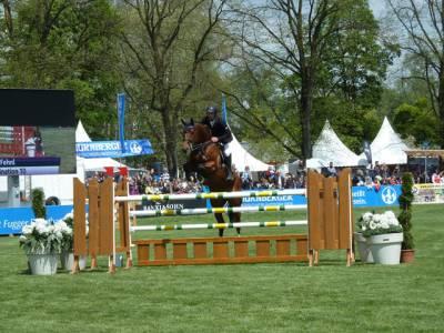 Pferd International 17