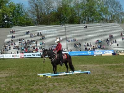 Pferd International 19