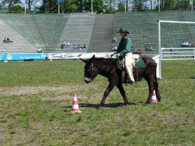 Pferd International 21