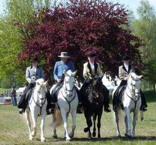 Pferd International 25
