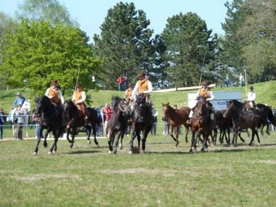 Pferd International 26