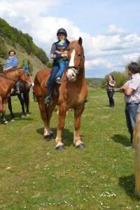 Pferdesegnung 2015 20