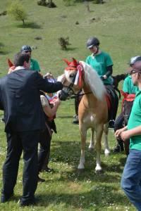 Pferdesegnung 2015 23