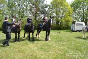 Pferdesegnung 2015 29