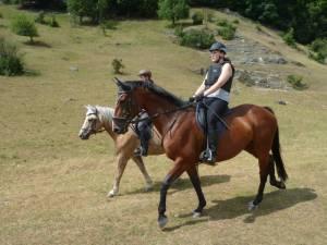 Pferdesegnung 7 2012 04