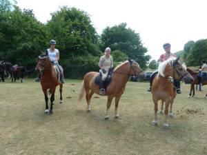 Pferdesegnung 7 2012 08