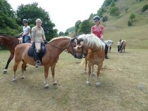 Pferdesegnung 7 2012 09