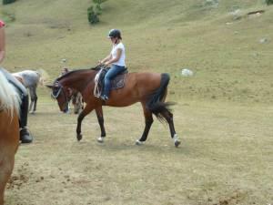 Pferdesegnung 7 2012 10
