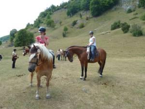 Pferdesegnung 7 2012 11