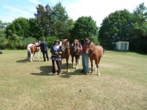 Pferdesegnung 7 2012 14