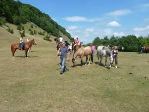 Pferdesegnung 7 2012 16