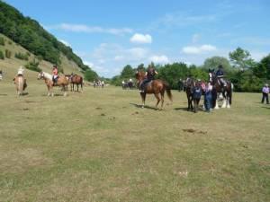 Pferdesegnung 7 2012 19