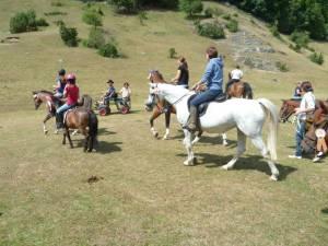 Pferdesegnung 7 2012 20