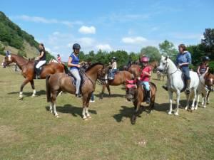 Pferdesegnung 7 2012 21