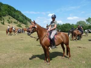 Pferdesegnung 7 2012 22