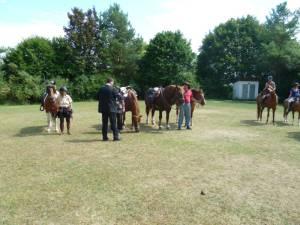 Pferdesegnung 7 2012 27