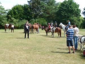 Pferdesegnung 7 2012 36