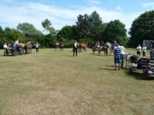 Pferdesegnung 7 2012 37
