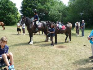 Pferdesegnung 7 2012 38
