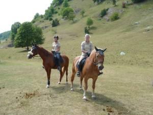 Pferdesegnung 7 2012 40