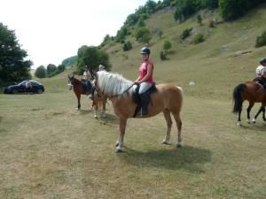Pferdesegnung 7 2012 41