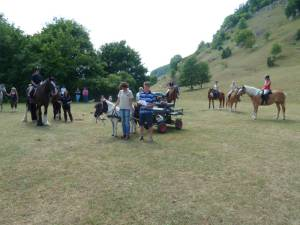 Pferdesegnung 7 2012 45