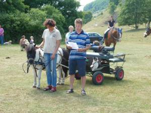 Pferdesegnung 7 2012 46