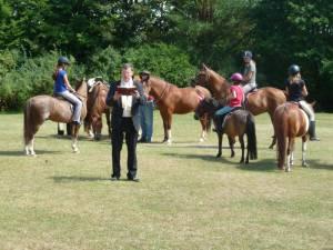 Pferdesegnung 7 2012 48