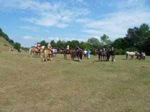 Pferdesegnung 7 2012 61