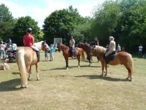Pferdesegnung 7 2012 62