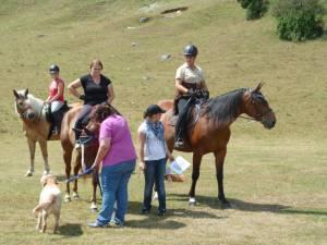 Pferdesegnung 7 2012 65