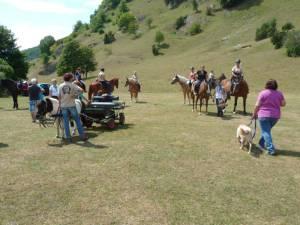 Pferdesegnung 7 2012 66