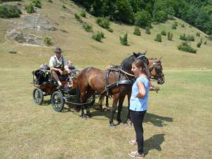 Pferdesegnung 7 2012 68