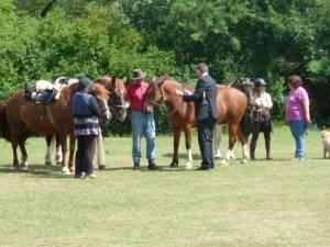 Pferdesegnung 7 2012 71