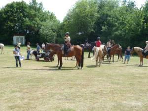 Pferdesegnung 7 2012 72