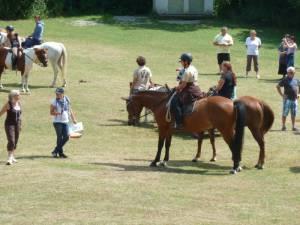 Pferdesegnung 7 2012 73