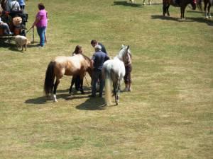 Pferdesegnung 7 2012 75