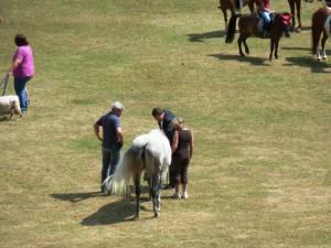 Pferdesegnung 7 2012 77
