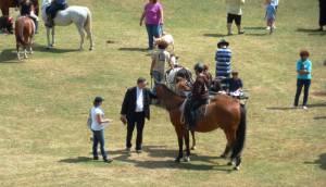 Pferdesegnung 7 2012 78