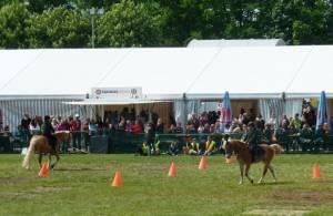 Pferdinter 5 2012 03