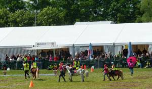 Pferdinter 5 2012 04