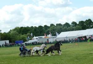 Pferdinter 5 2012 05