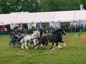 Pferdinter 5 2012 06
