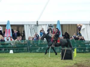Pferdinter 5 2012 07