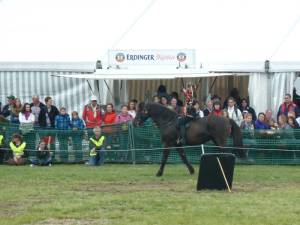 Pferdinter 5 2012 08