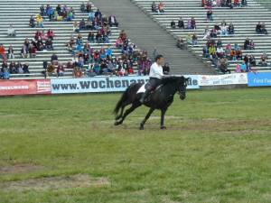 Pferdinter 5 2012 17